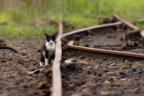 「猫×鉄道」異色コラボの写真展、7月25日から開催