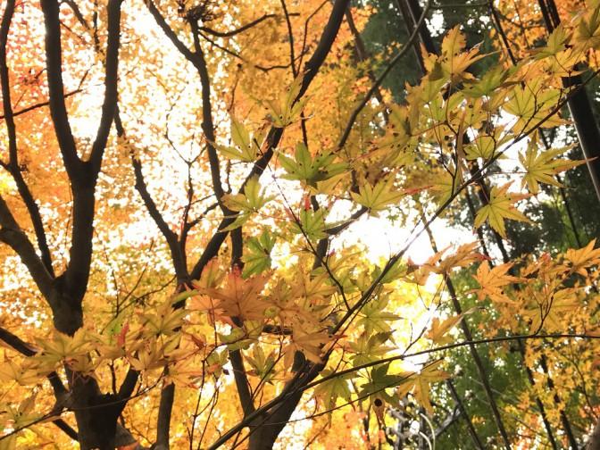 【高尾山の紅葉】-iPhoneで撮った写真を簡単にプリントしよう編-