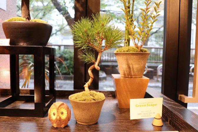 プチ趣味始めよう!ミニ盆栽でおうちに四季折々の風景を