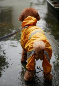 雨・雪の日の愛犬との散歩も楽しいね