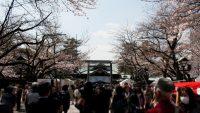 お花見シーズン突入! 家族連れで桜を楽しめるイチオシスポット紹介