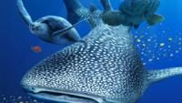 【美ら海 in 銀座】ソニービルがまるごと水族館に。夏休みラストは海を見て癒されよう