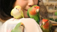 【インコサイダーってなんだ?】関東の鳥好きが集まる「小鳥のアートフェスタ in横浜」とはいったいなんだ?