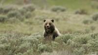 山で熊に遭遇 生き延びる方法