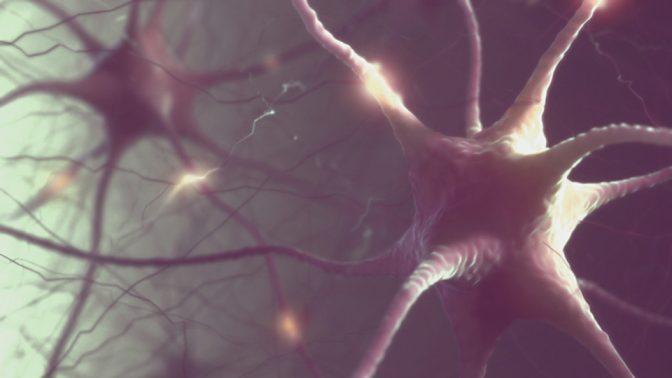 年を取っても脳は若々しい「スーパーエイジャー」になるには?