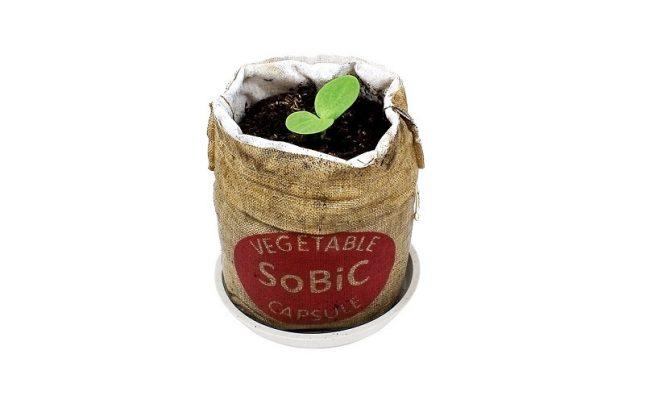 ベランダでトマトを収穫?! お手軽に栽培できる野菜カプセル