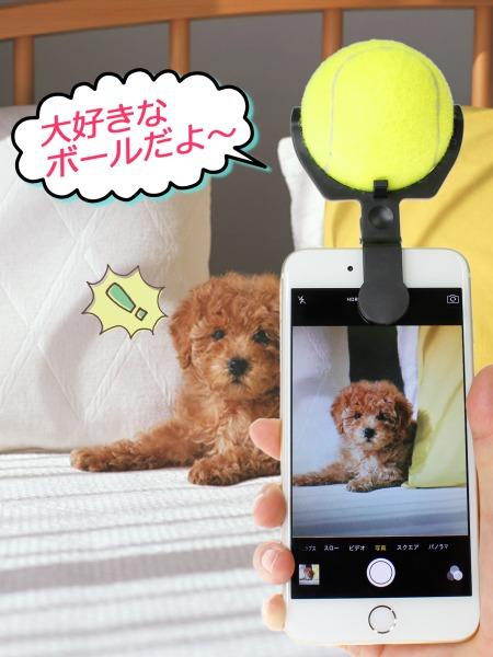 【ペットの目線を釘付け】愛犬のベストショットが撮れる「こっち向いてワン」