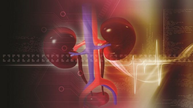 マラソン後に腎臓が重大な機能低下を起こすワケ
