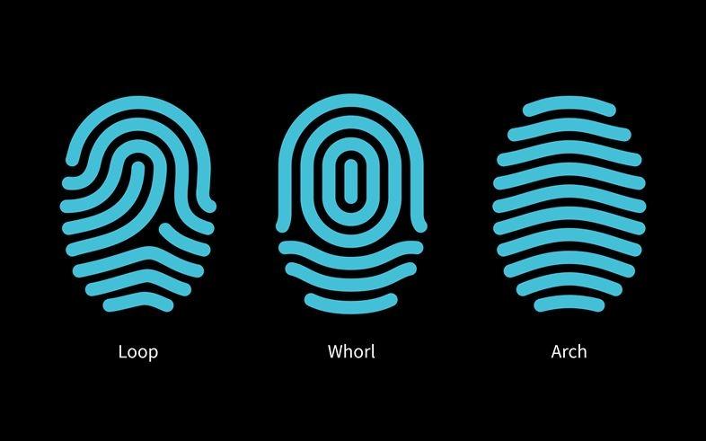ガラス下への指紋認証機能の埋め込み技術
