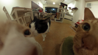360°猫まみれをいつでも