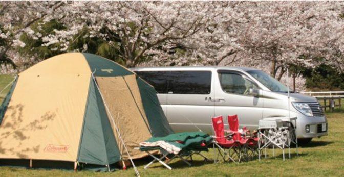 お花見キャンプも楽しい