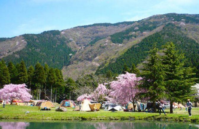 桜がキレイなリバーランズ角川