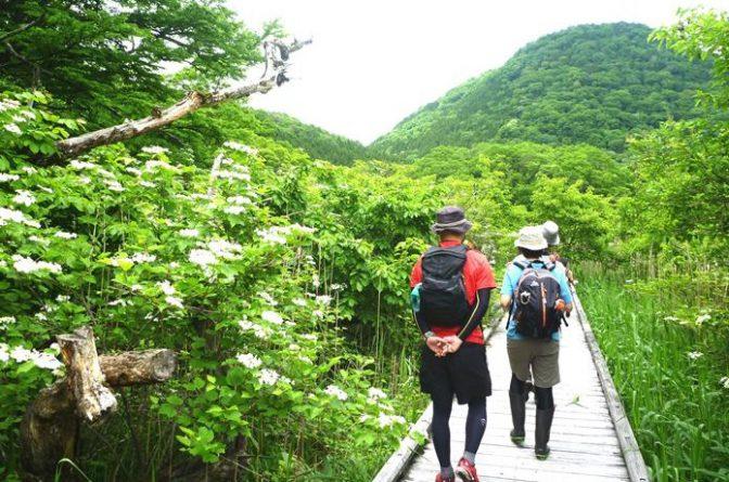 春の野山を歩くのも楽しい