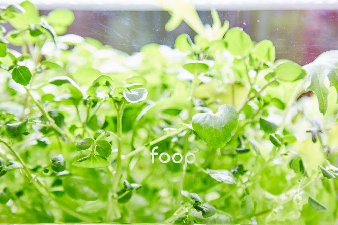 スマートフォンと連動するIoT水耕栽培機「foop」