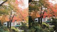 【高尾山の紅葉】-iPhoneでキレイに撮るための2つのコツ編-
