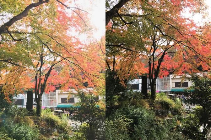 【高尾山の紅葉】iPhoneで撮ってプリントしよう~撮影編~