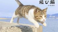 浅草が猫だらけになる日