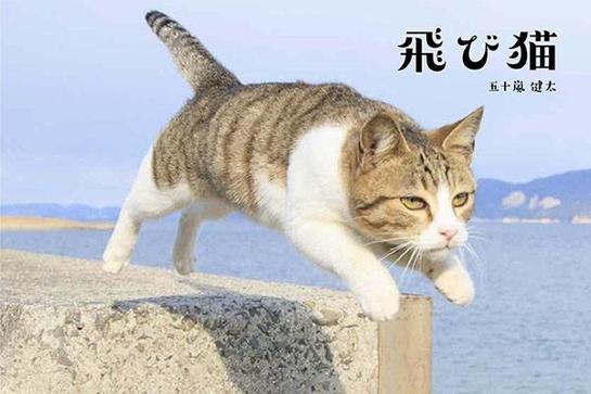 猫イベント「ねこ専」