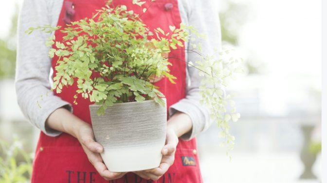 知っているようで知らない!? 観葉植物が枯れる主な8つ原因