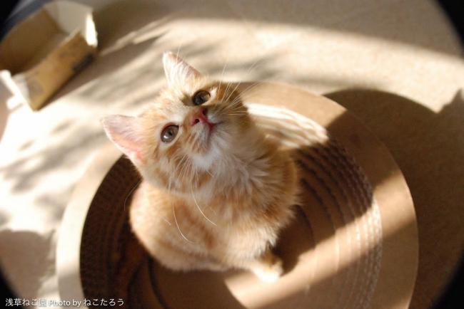 保護猫カフェマップ