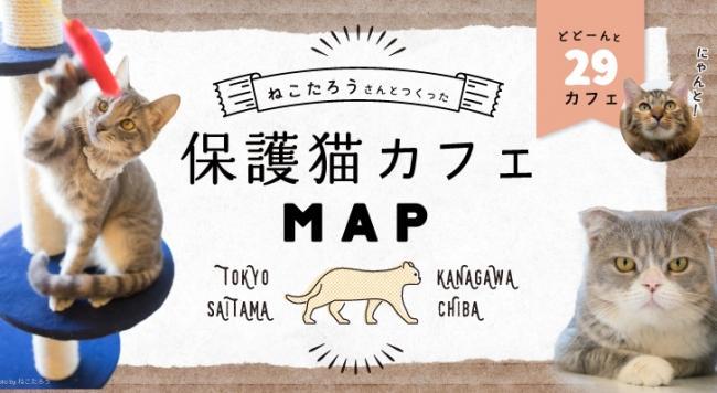 【猫好き必見】未来の飼い猫と触れ合える保護猫カフェ情報サイト「保護猫カフェマップ」OPEN