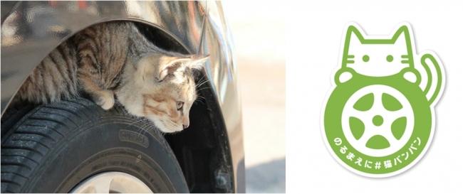日産自動車『#猫バンバン プロジェクトムービー』