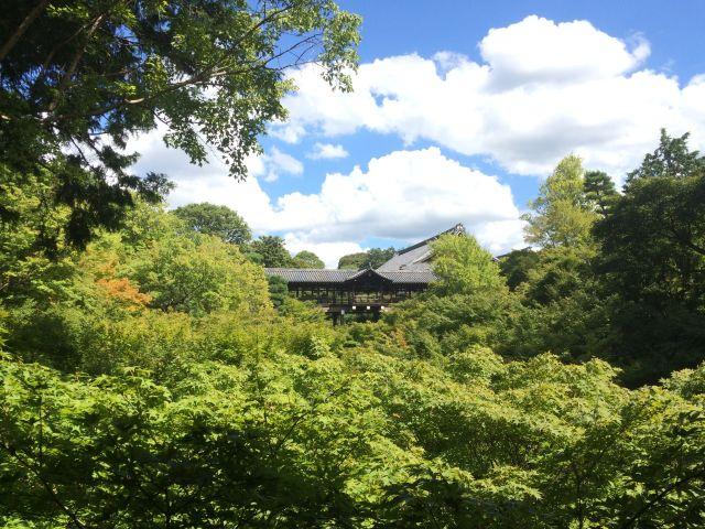 この時期がおススメ!新幹線の往復より安い1泊京都旅行